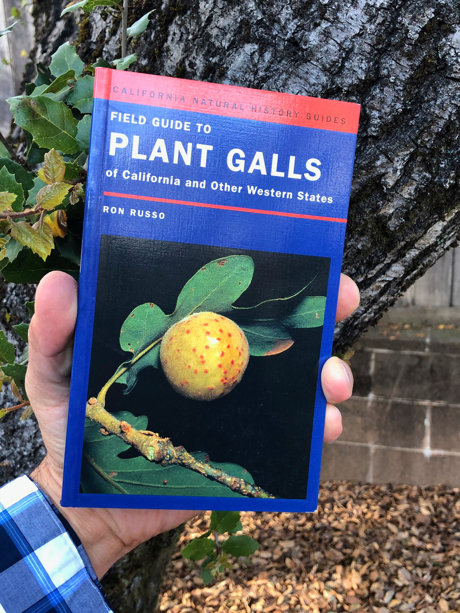 gall book
